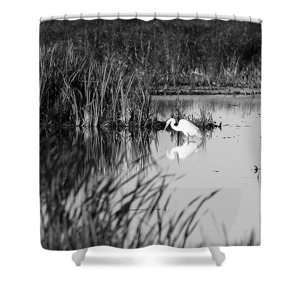 Egret - Horicon Marsh - Wisconsin Shower Curtain