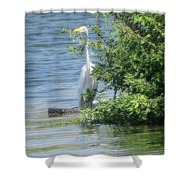 Great Egret In The Marsh Shower Curtain