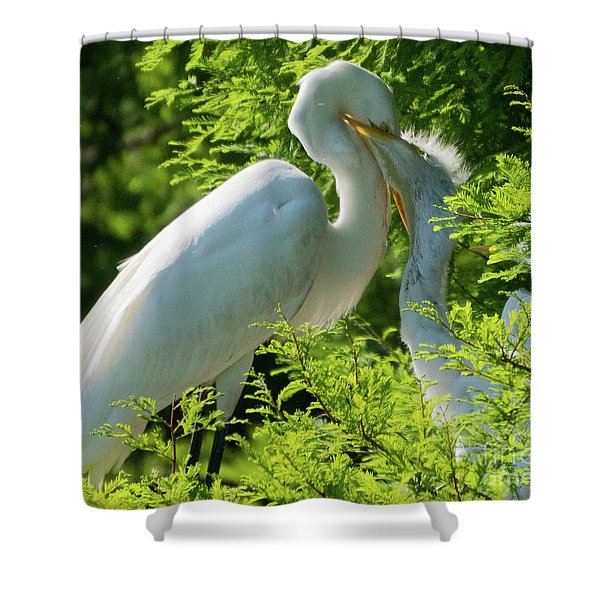 Egrets At Feeding Time Shower Curtain