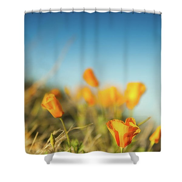 El Paso Poppies Shower Curtain