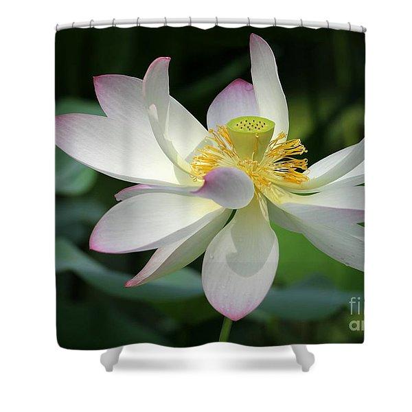 Elegant Lotus Shower Curtain