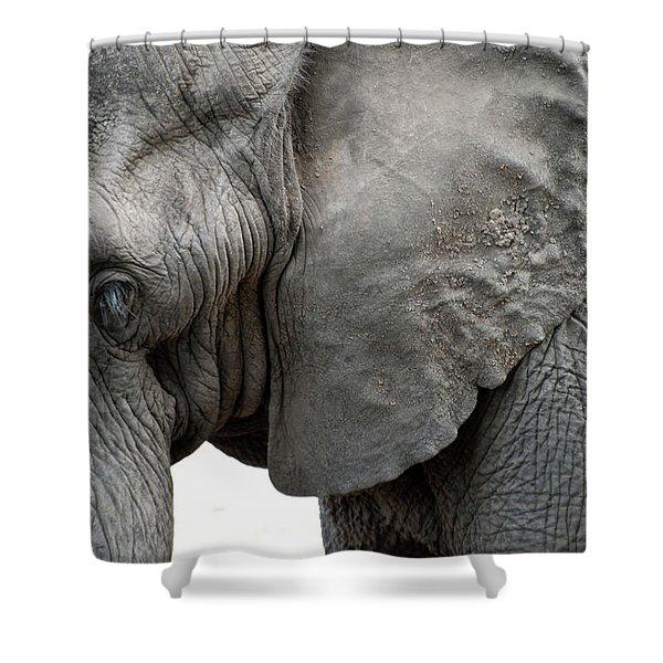 Elephant 2 Shower Curtain