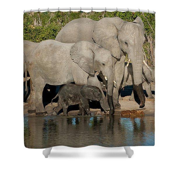 Elephant 3 Shower Curtain