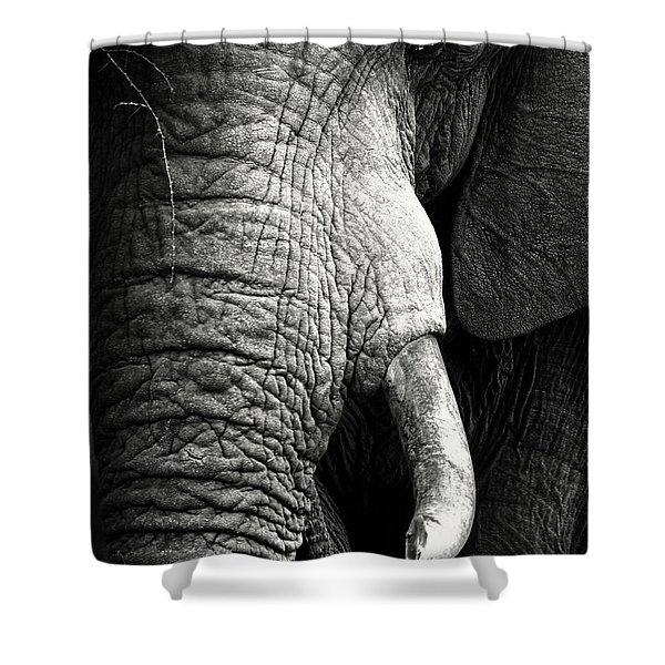 Elephant Close-up Portrait Shower Curtain