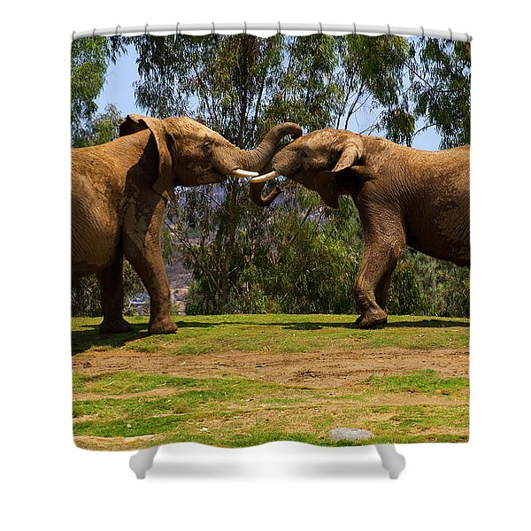 Elephant Play 3 Shower Curtain
