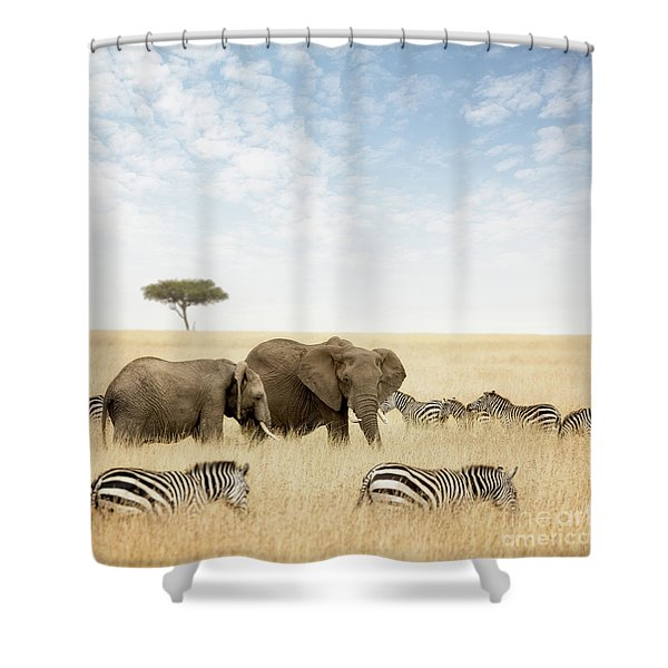 Elephants And Zebras In The Masai Mara Shower Curtain
