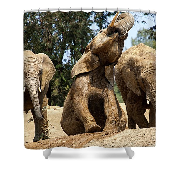 Elephants Shower Curtain