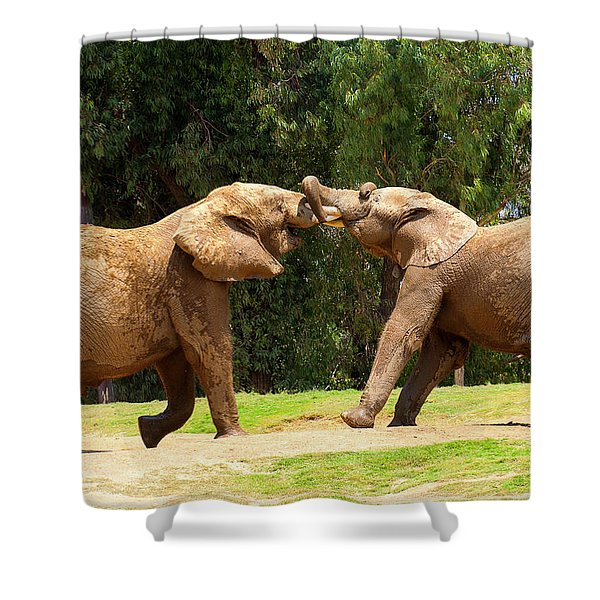 Elephants At Play 2 Shower Curtain