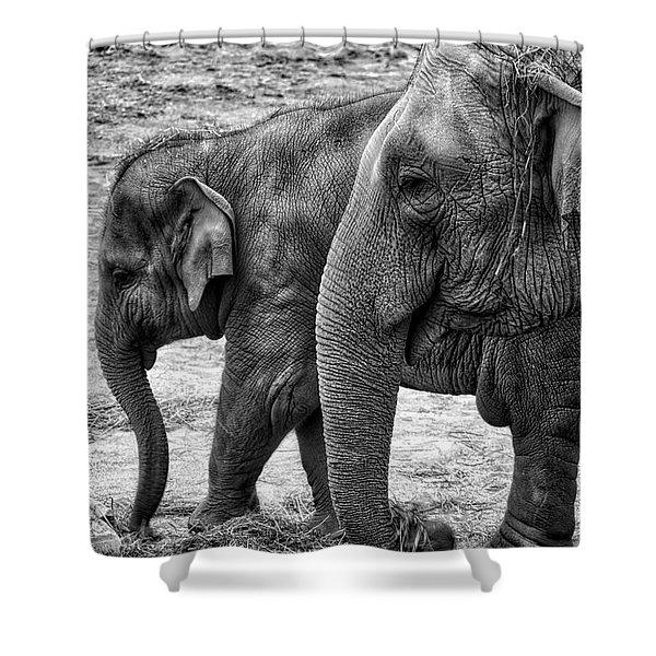 Elephants Bw Shower Curtain