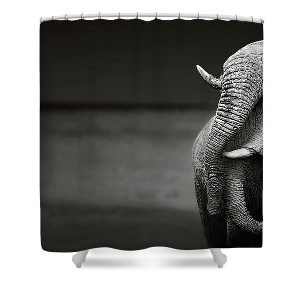 Elephants Interacting Shower Curtain