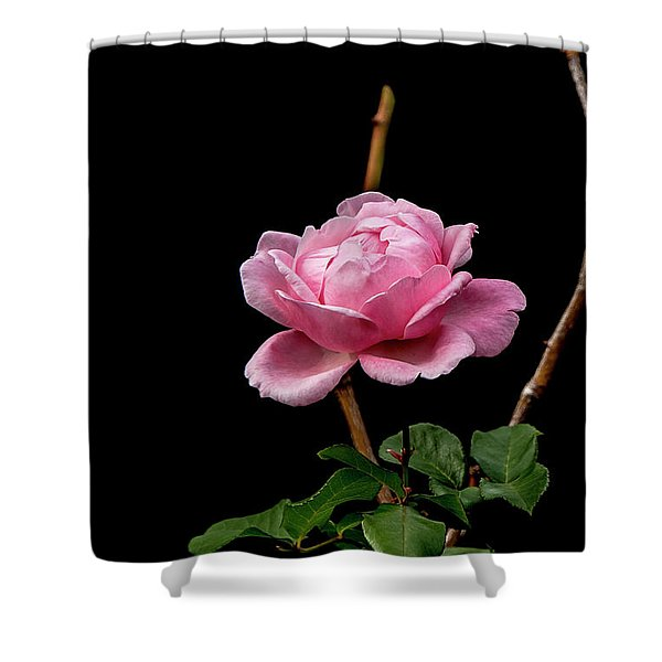 Elizabeth Shower Curtain