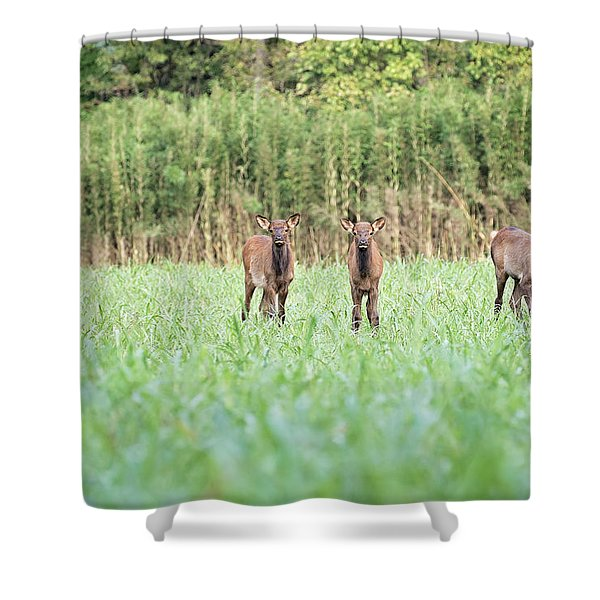 Elk Calves Shower Curtain