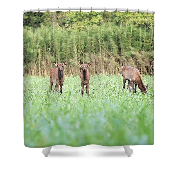 Elk Calves Shower Curtain