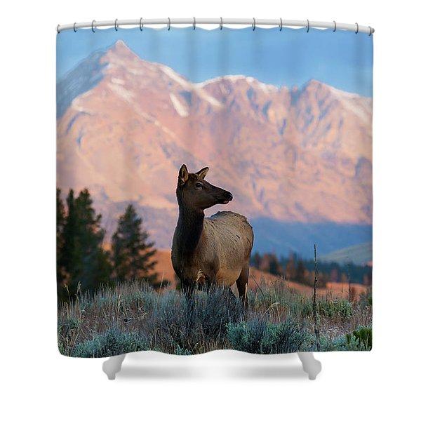 Elk Majesty Shower Curtain