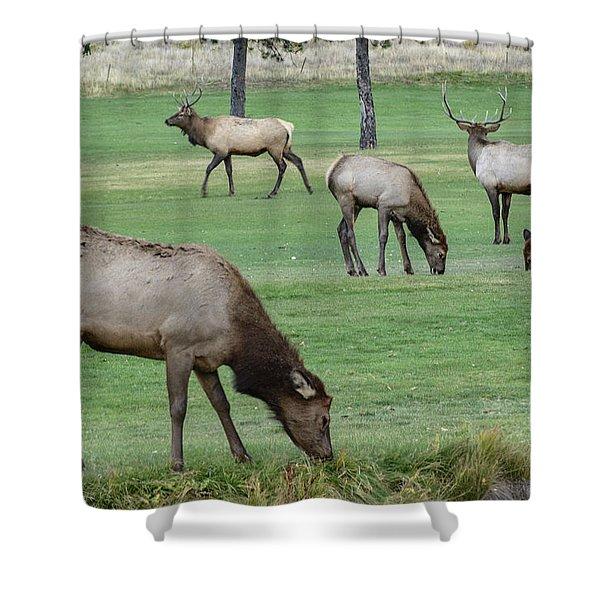 Elk On Golf Course Estes Park Colorado Shower Curtain