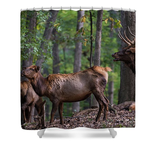 Shower Curtain featuring the photograph Elk Romance by Andrea Silies