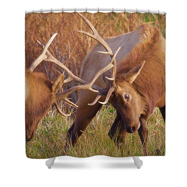 Elk Tussle Shower Curtain