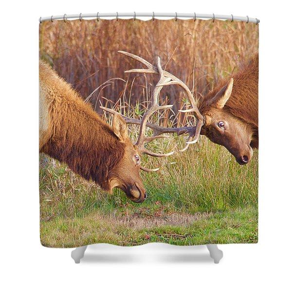 Elk Tussle Too Shower Curtain