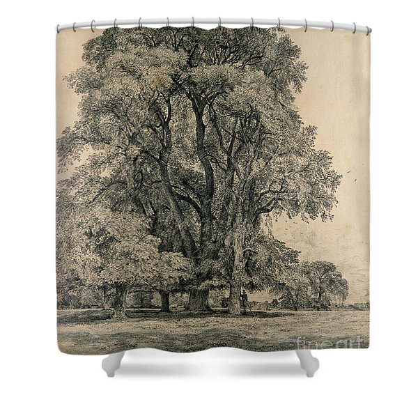 Elm Trees In Old Hall Park Shower Curtain