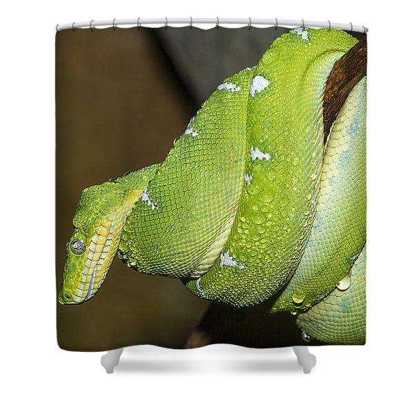 Emerald Tree Boa Shower Curtain