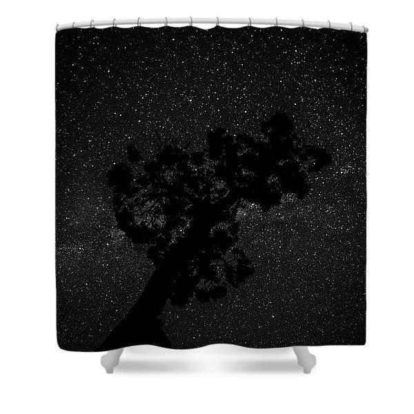 Empty Night Tree Shower Curtain