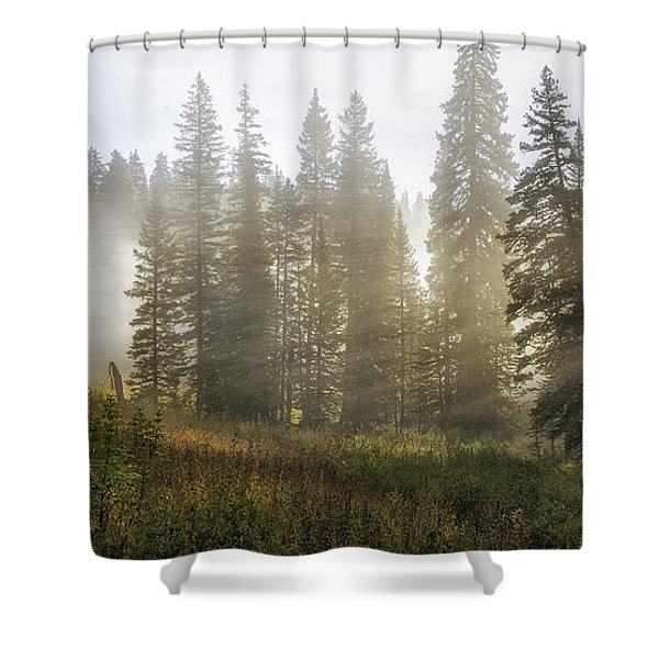 Enchanted Forest Of Kebler Pass  Shower Curtain