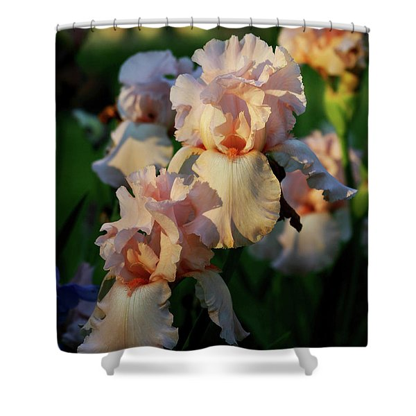 End Of Day Pink Irises 6702 H_2 Shower Curtain