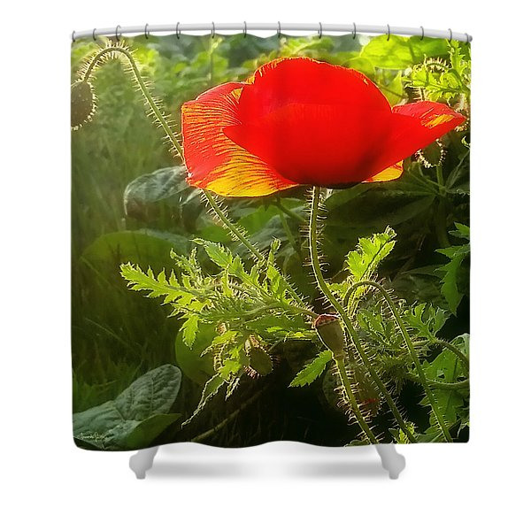Red Poppy At Sunset Shower Curtain