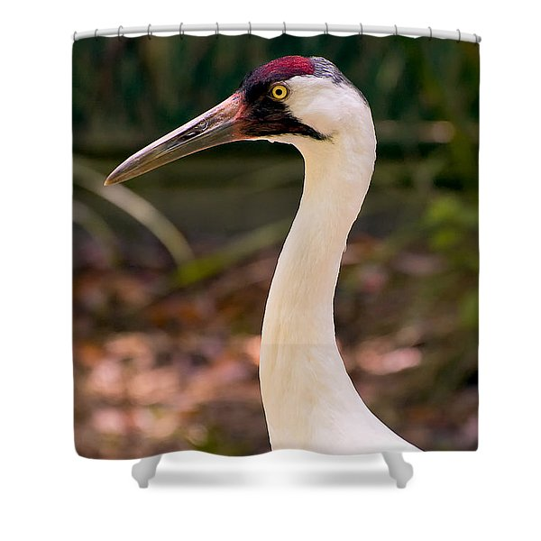 Endangered Species - Whooping Crane Shower Curtain