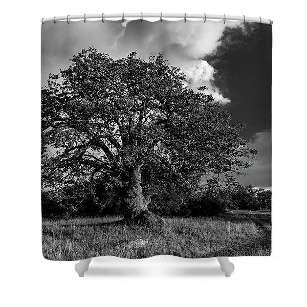 Engellman Oak Palomar Black And White Shower Curtain