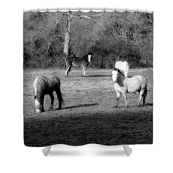 English Horses Shower Curtain