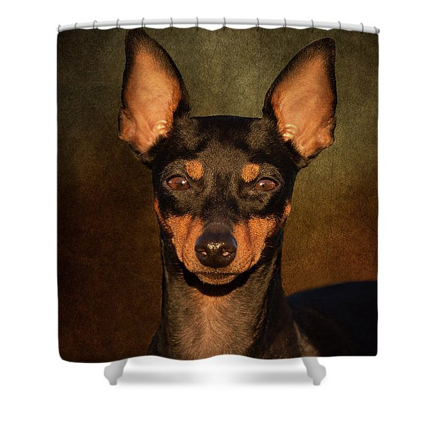 English Toy Terrier Shower Curtain