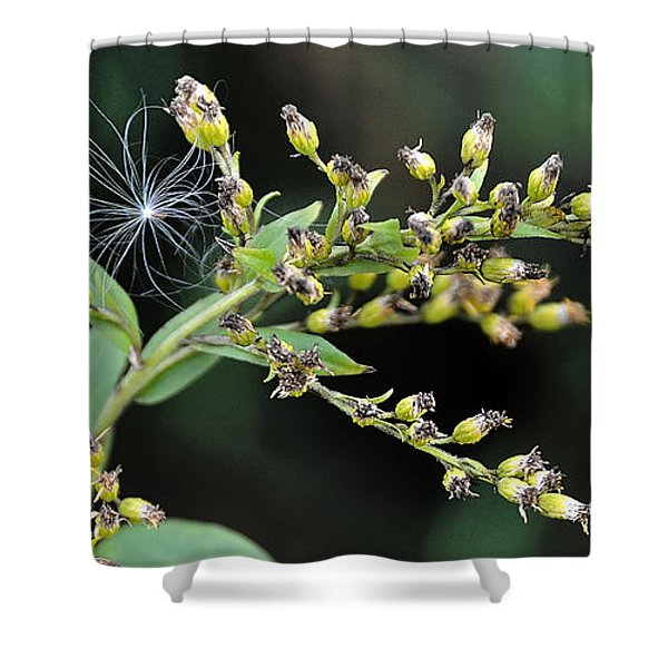 Entrapped Shower Curtain