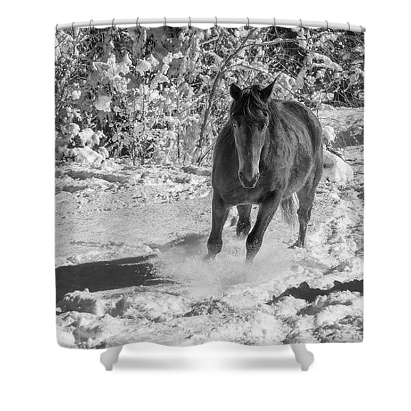 Equine Playing In The Snow Shower Curtain