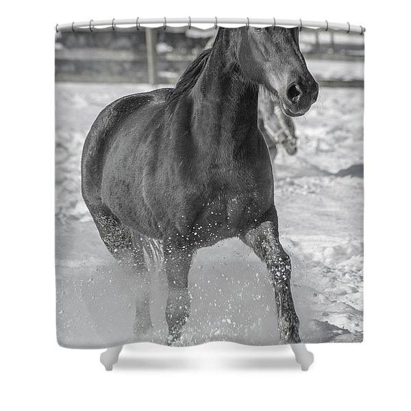 Equine Snowy Splendor  Shower Curtain