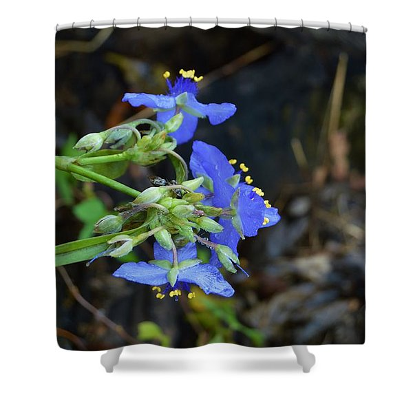 Erect Dayflower Shower Curtain