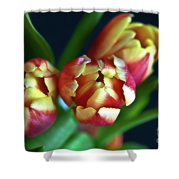 Shower Curtain featuring the photograph Eternal Sound Of Spring by Silva Wischeropp