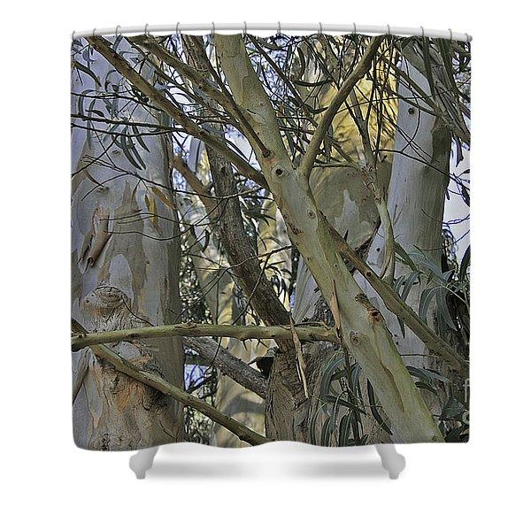 Eucalyptus Study Shower Curtain