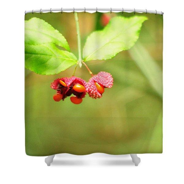Euonymus Americanus  American Strawberry Bush Shower Curtain