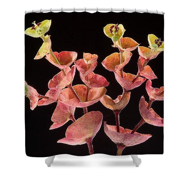 Euphorbia Shower Curtain
