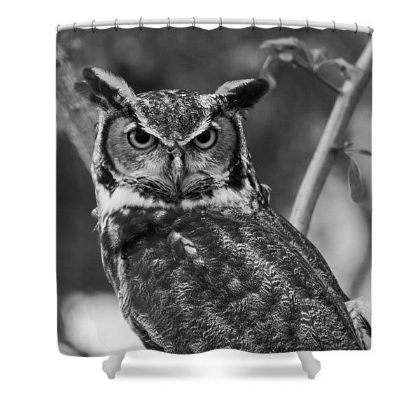 Eurasian Eagle Owl Monochrome Shower Curtain