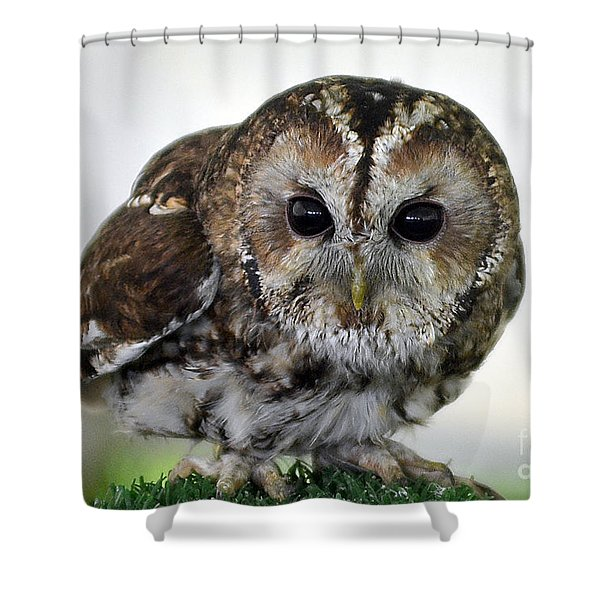 Eurasian Tawny Owl Shower Curtain
