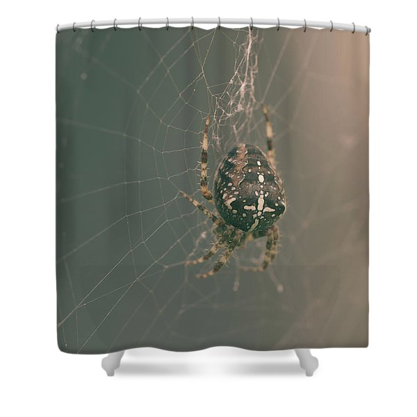 European Garden Spider B Shower Curtain