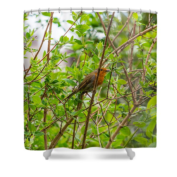 European Robin Shower Curtain