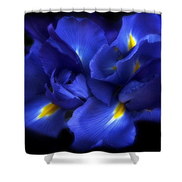 Evening Iris Shower Curtain