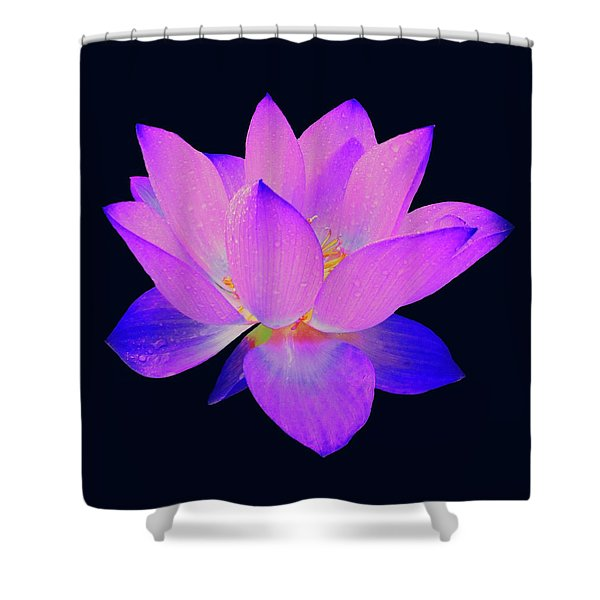 Evening Purple Lotus  Shower Curtain