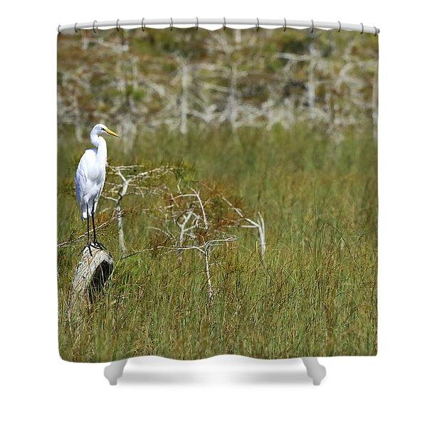 Everglades 451 Shower Curtain