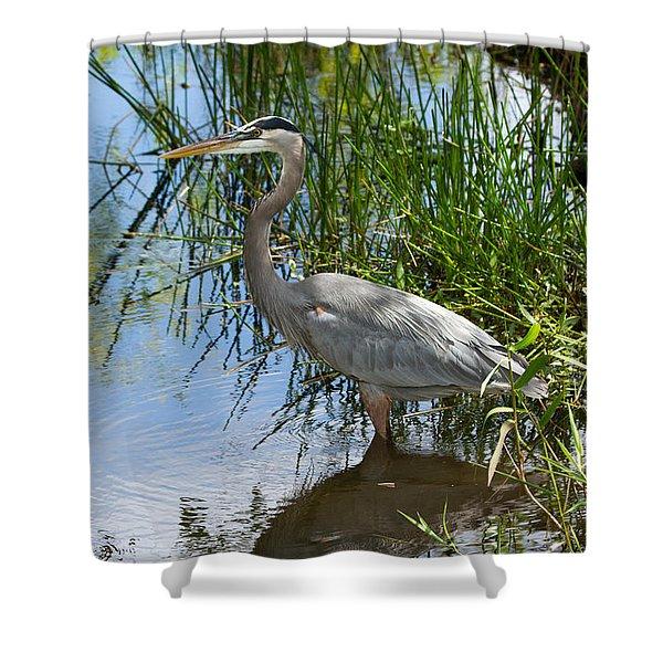 Everglades 572 Shower Curtain