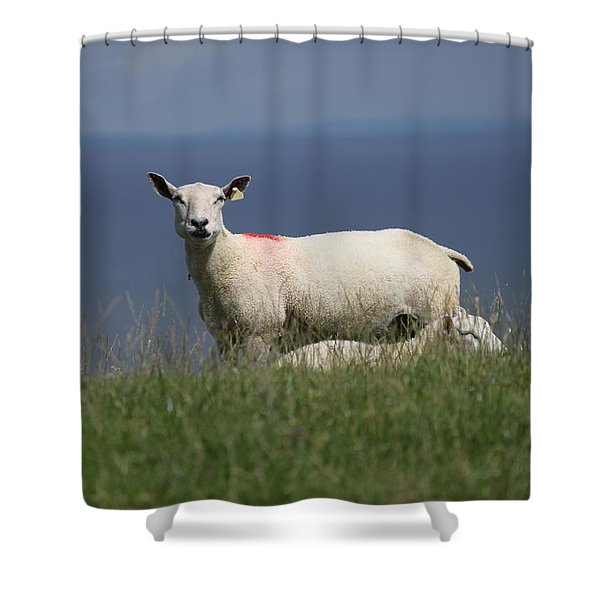 Ewe Guarding Lamb Shower Curtain