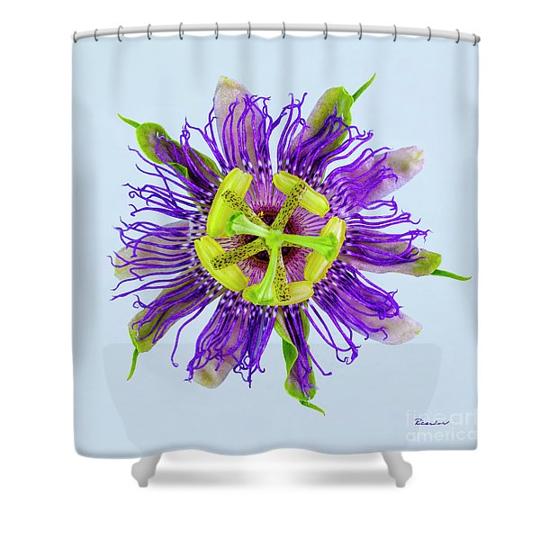 Expressive Yellow Green And Violet Passion Flower 50674b Shower Curtain